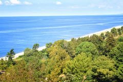 Beach and Forest Stock Image