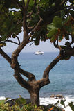 Beach Frame. Vertical image of a boat framed in the branches of a seaside tree Stock Images