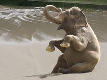 Beach frolic. A female Indian elephant enjoys a day at the beach Royalty Free Stock Photos