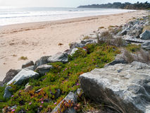 Beach front with ice flowers and rocks. Beach front with rocks and ice flower plants. Stinson Beach California Stock Photos