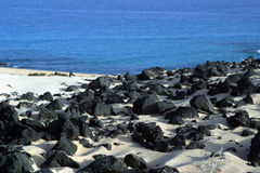 Beach on Fuertaventura. Volcanic rocks on sandy beach with blue sea in background, Fuertaventura, Canary Islands, Spain stock images