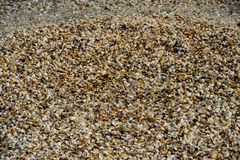 Beach full of  seashells. Seashells in the sand at the Black Sea, Romania. Seashells in the sand. A variety of seashells at the seaside in the sun. Souvenir royalty free stock photos