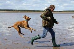 Beach fun. Dog chasing man on the beach Royalty Free Stock Photos