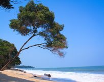 Beach in Gabon. Beautiful beach in Pongara National Park, Gabon, Africa Stock Image