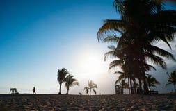 Beach on Galapagos Isabela island, Ecuador Royalty Free Stock Photo