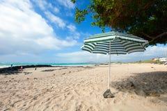 Beach on Galapagos Isabela island, Ecuador Stock Photography