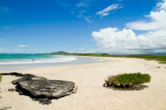 Beach of the Galapagos Islands Royalty Free Stock Photo