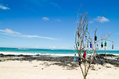 Beach of the Galapagos Islands Royalty Free Stock Photography