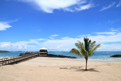 Beach of the Galapagos Islands Stock Image