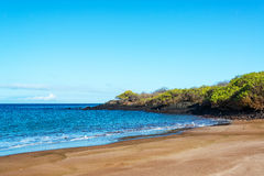 Beach in the Galapagos Royalty Free Stock Image