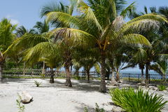 Beach garden Holiday summer Mexico Palms Royalty Free Stock Photography