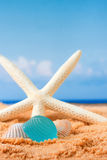 Beach glass and starfish Royalty Free Stock Images