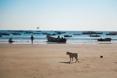 Beach in Goa Royalty Free Stock Image