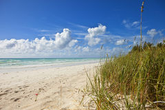Beach on grand bahama Stock Photo
