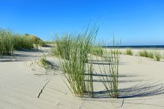 Beach_grass Foto de Stock Royalty Free