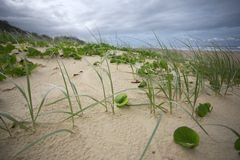 Grass on coastal sand dunes Royalty Free Stock Photography