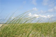 Beach grass Stock Photography