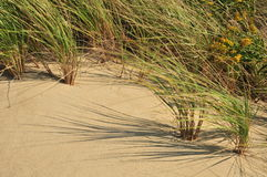 Beach Grass Stock Images