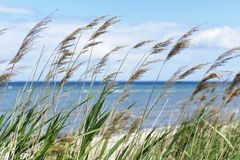 Free Beach Grass Royalty Free Stock Photography - 27639537