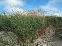 Beach grass Stock Photography