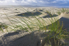 Beach grass in the breeze Royalty Free Stock Photos