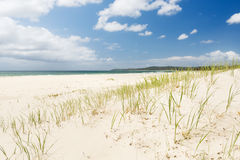 Beach Grass Royalty Free Stock Photos