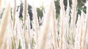 Beach grass stock footage