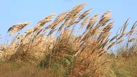Beach grass stock video footage
