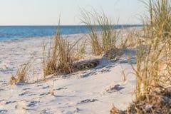 Beach grass Royalty Free Stock Photography