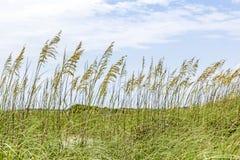 Beach grass Stock Image