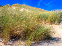Beach Grass Royalty Free Stock Images