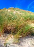 Beach Grass. Dune Grass in the Netherlands Royalty Free Stock Images