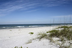 Beach Grass Royalty Free Stock Image