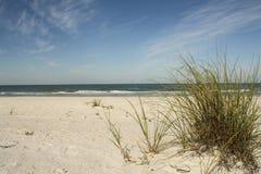Beach Grass Stock Photos