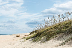 Free Beach Grass In Sand Dunes Stock Photography - 59443942