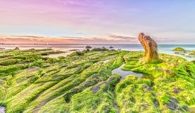 Beach grass jelly moss dawn on summer day Stock Image
