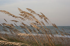 Beach Grass. Looking out toward the ocean over grasses on the sand dunes royalty free stock photo