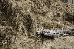 Beach Grass. Old log in the grass along the beach Royalty Free Stock Image