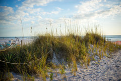 Beach Grass. On the path to the ocean on a big blue sky day Royalty Free Stock Image