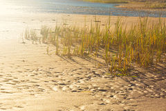 Beach Grass Stock Photos