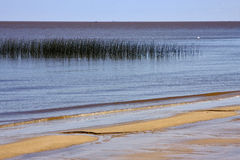 Beach and grass in rio de la plata Stock Photos