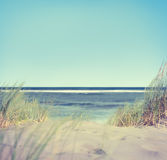 Beach with Grass and Sand Stock Images