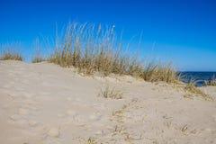 Beach Grass on Sand Dune at Sandbridge Beach in Virginia Royalty Free Stock Images