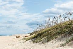 Beach Grass in Sand Dunes. At Sandbridge Beach, in Virginia Beach, Virginia stock photography