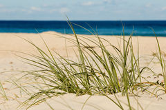 Beach grass in sand Royalty Free Stock Photography