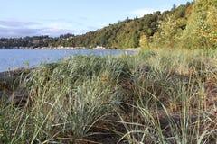 Beach Grass at Seahurst Park Beach. Beach grass and south Seattle at the beach in Seahurst Park royalty free stock photos