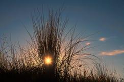 Beach grass with the setting sun Stock Photos