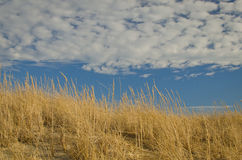 Beach-grass on a sunny day Royalty Free Stock Photography
