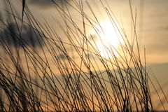 Beach grass with sunset Stock Photography