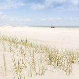 Beach Grass with 4WD Royalty Free Stock Image